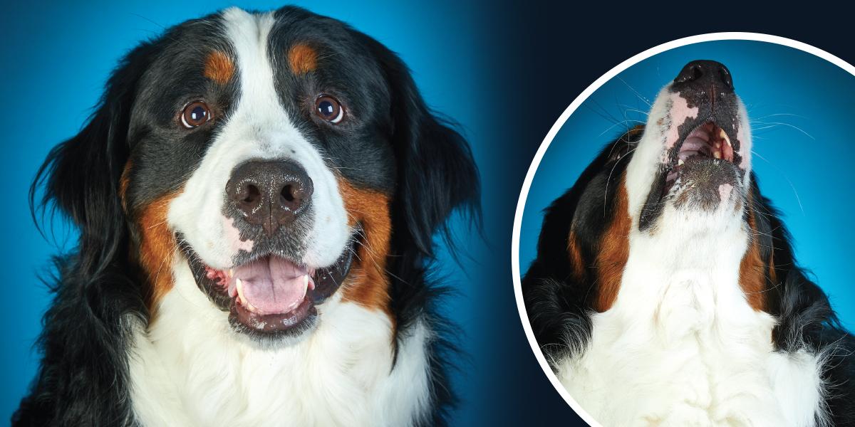 Meet the 2019 Cutest Pet Contest Winners